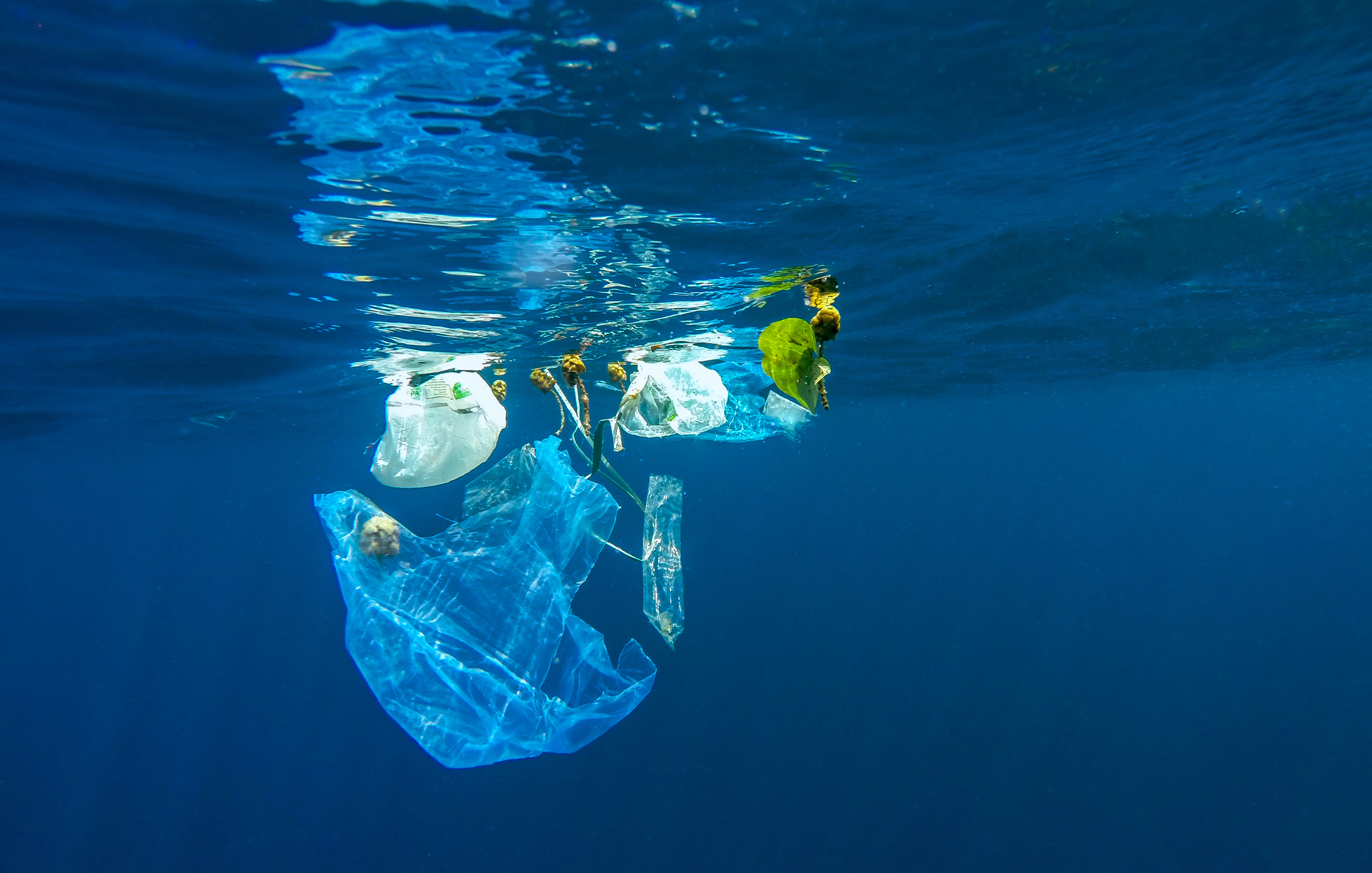 A Plastic Ocean | Mirpuri Foundation
